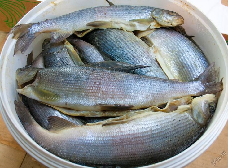 Госрыбцентр разработал новый проект правил рыболовства. Для ямальцев установили суточную норму вылова водных биологических ресурсов - до двадцати килограммов.   В сутки может быть выловлен один килограмм арктического гольца, одна рыбина тайменя только в бассейне реки Таз, до пяти килограммов хариуса, до десяти килограммов ряпушки и корюшки, до двадцати килограммов черной рыбы. Ранее таких норм не было. Сейчас проект правил рыболовства проходит общественное обсуждение. Новые правила вступят…