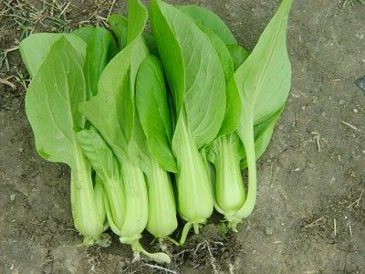 Organic Heirloom 1000 Seeds Garden Chinese Cabbage Pak Choi Vegetable Plant Bulk Fresh Seeds F32, $1.79