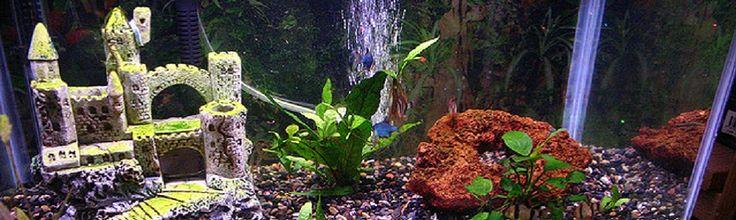 10 best fishyyyyy images on Pinterest Fish aquariums, Aquariums - halloween fish tank decorations