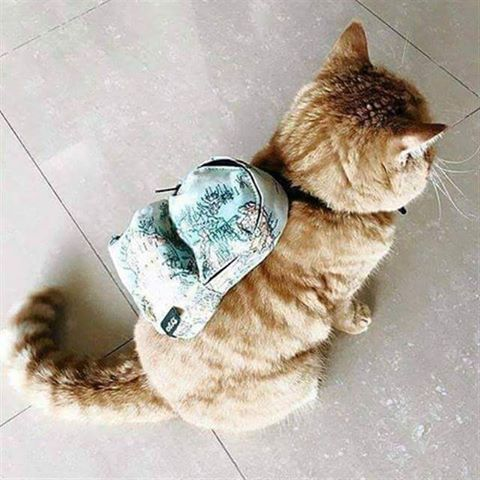 Cat Defending Bags Of Food