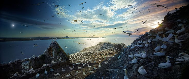 The Epic Journeys of Migratory Birds
