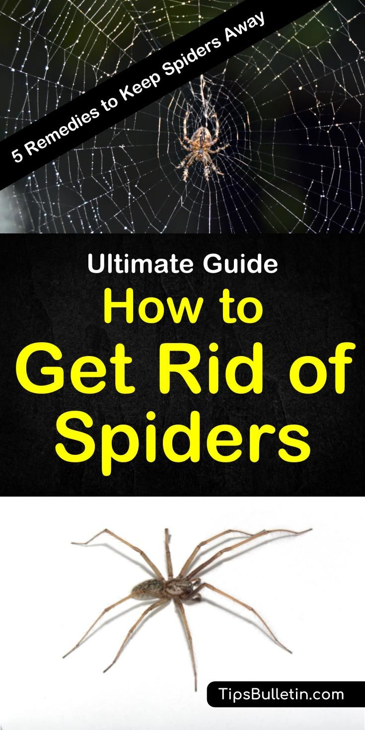 5 Simple Solutions To Get Rid Of Spiders Get Rid Of Spiders