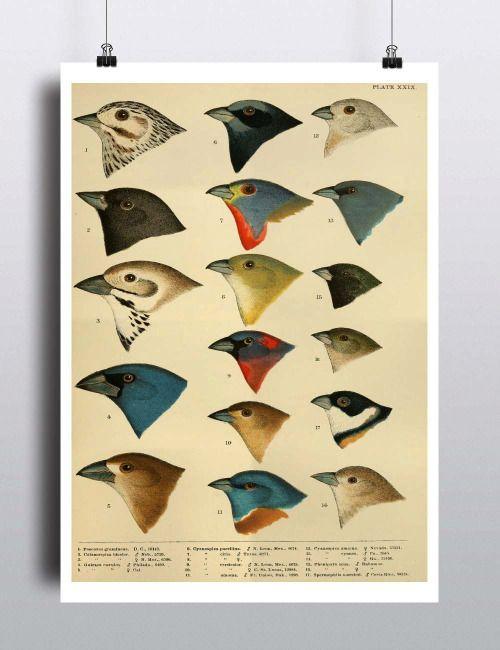 76 best Wall Art images on Pinterest   Art print, Deserts and ...