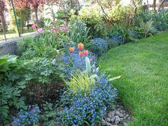 piante da ombra e umido - Cerca con Google