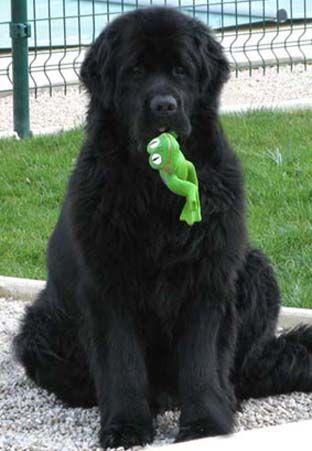 Newfie & Kermit