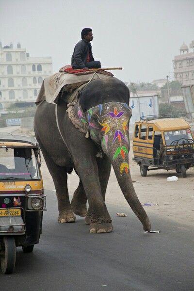 Éléphants à Jaipur