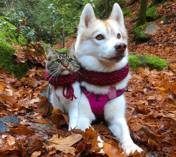 ハスキーと元保護猫なんでもないような犬猫写真が幸せだと思い出させてくれる