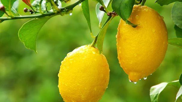 .Limon