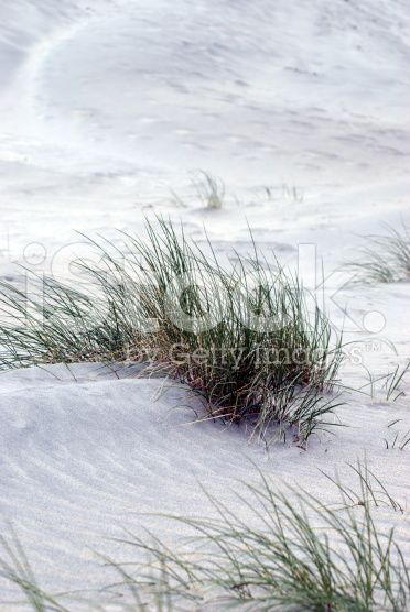 Sand and Marram Grass Background royalty-free stock photo