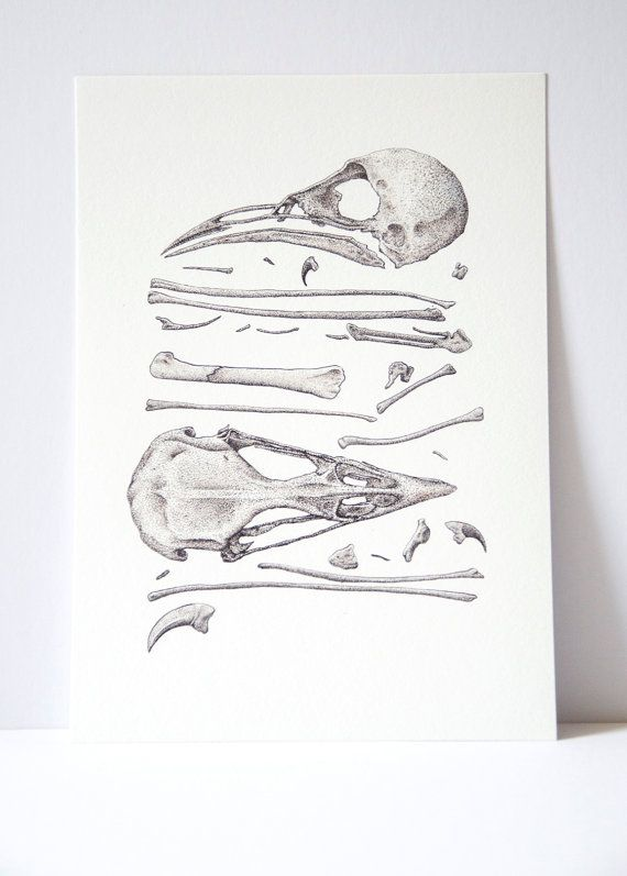 Bird skull and bones print science illustration by ArtByRachelCard