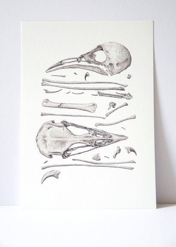 Bird skull and bones print science illustration by ArtByRachelCard