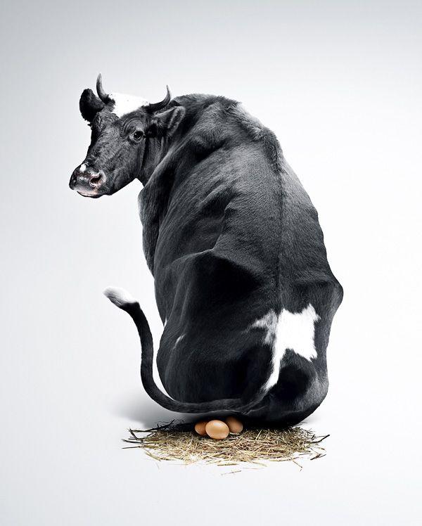 Картинка быка с приколом, картинки мяча футбольного