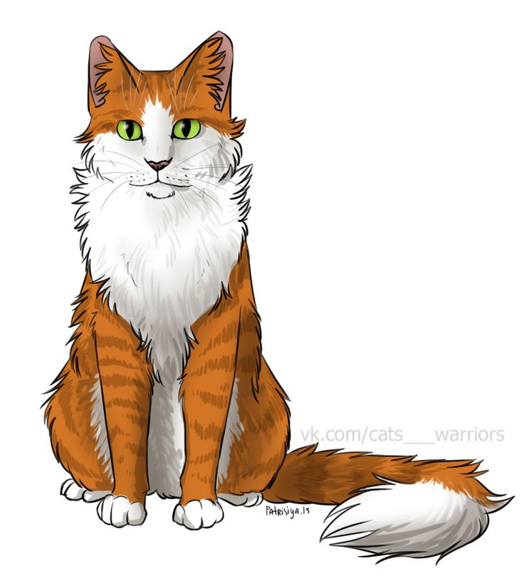Warriors Cats Into The Wild Movie: 998 Best Warrior Cats Images On Pinterest