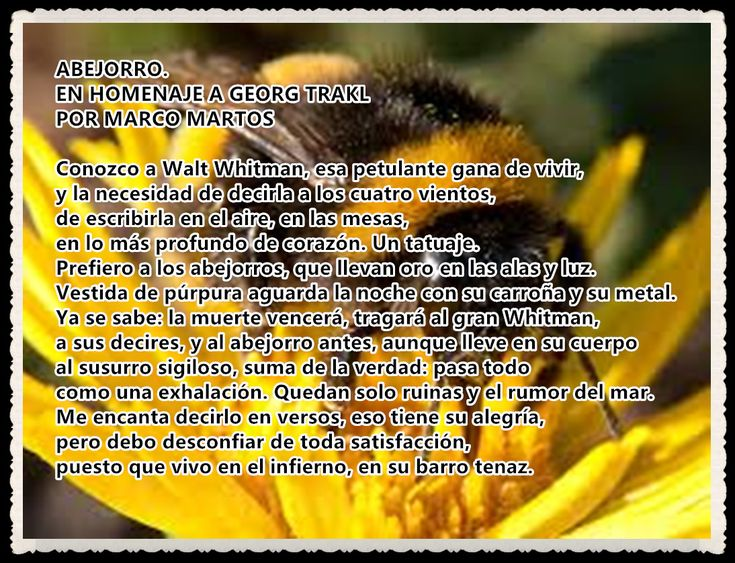 ABEJORRO.EN HOMENAJE A GEORG TRAKL POR MARCO MARTOS