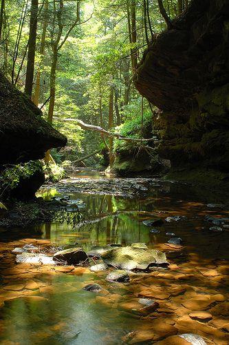 Caney Creek - Bankhead National Forest, Alabama http://www.vacationrentalpeople.com/vacation-rentals.aspx/World/USA/Alabama