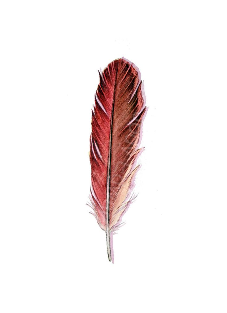 red feather tattoo | Red Feather - HOLD for JENNO MAYES Red Cardinal Feather 432 - Original ...