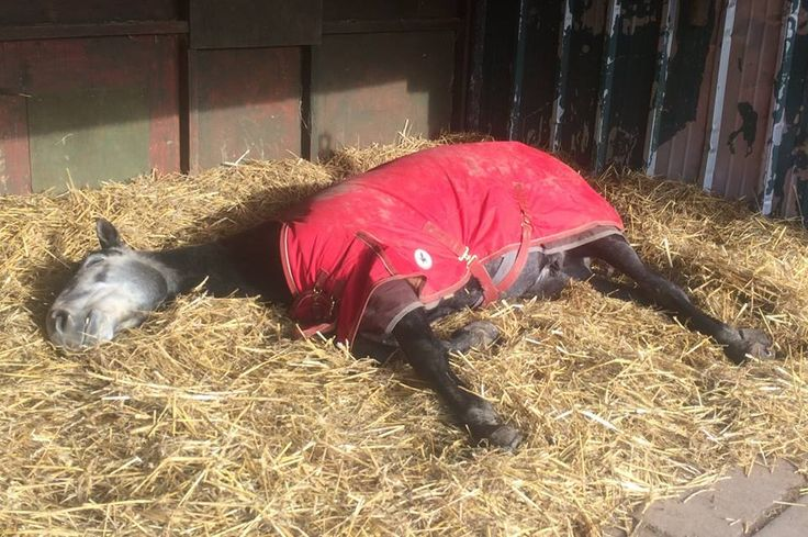 Proof that Derby House rugs aid with good snoozing! Shop the range www.derbyhouse.co.uk