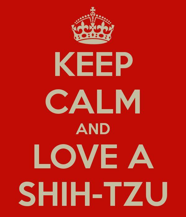 KEEP CALM AND LOVE A SHIH-TZU--- i love mine! little shit lol