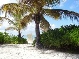 Turks and Caicos - you can swim with the dolphins here.