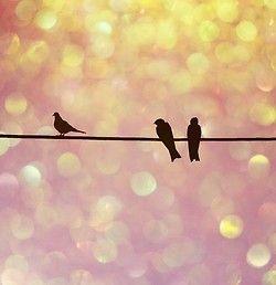 birdsWire, Birdie, Art, Pink, Nature Photography, Things, Beautiful Birds, Bokeh, Birds Silhouettes