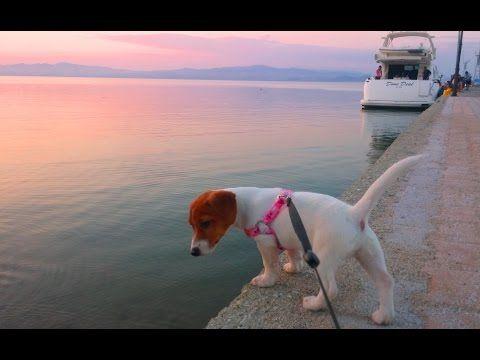 Отдых в греческой деревне - YouTube