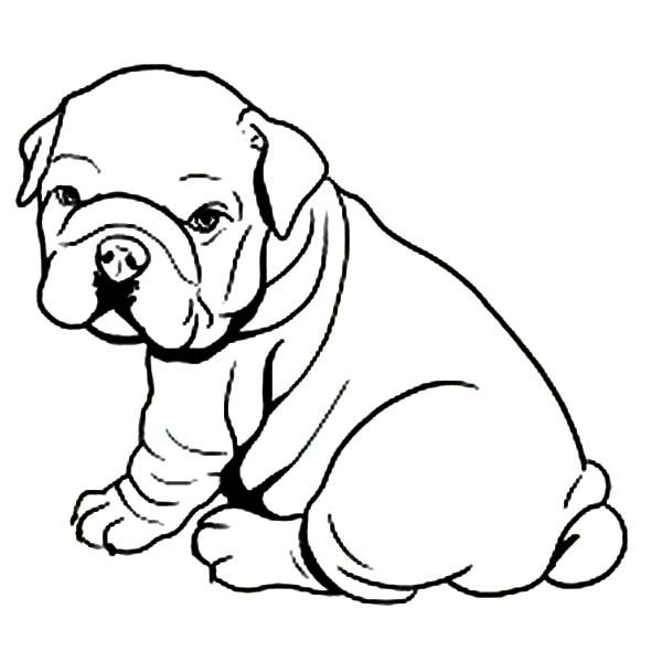 Fat Bulldog Like Towel Coloring Pages | Dogs | Pinterest | Coloring ...
