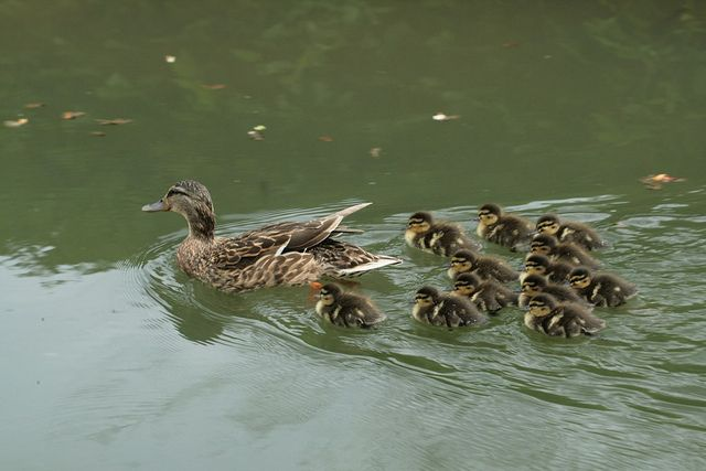 Group swimming lesson