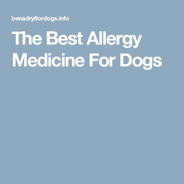The Best Allergy Medicine For Dogs