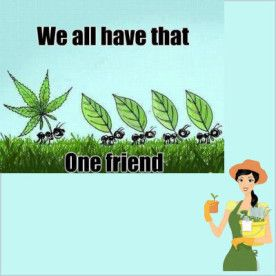 That one friend joke  - see more gardening jokes http://thegardeningcook.com/gardening-cooking-humor/