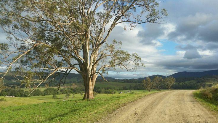 Country Roads, big old trees Bindera NSW Australia