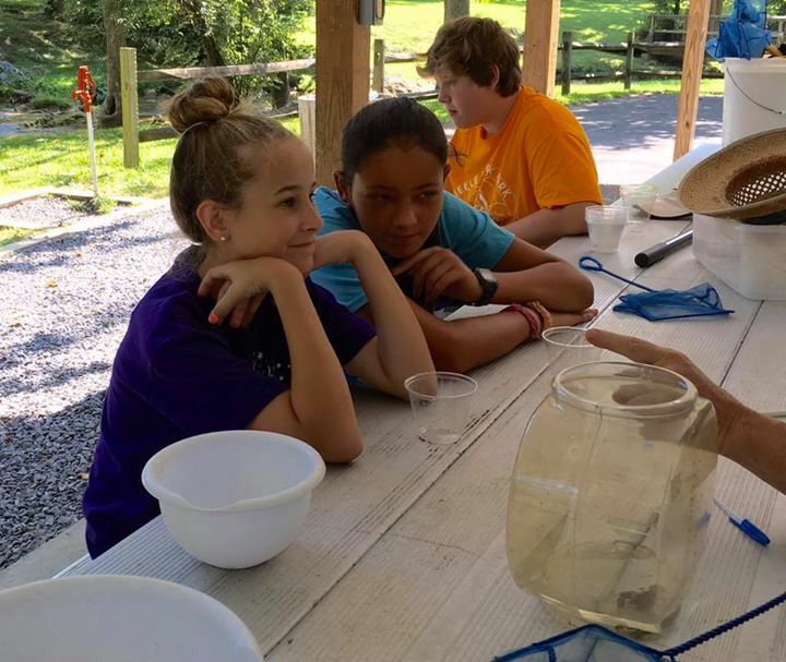Aquatic investigations with Don Holt at Steele Creek Park Summer Camp!