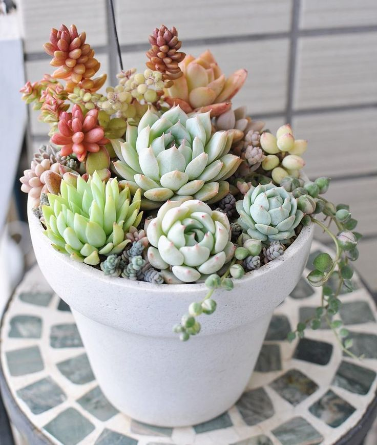 25 best ideas about succulent pots on pinterest linda plant spark 2012 and indoor plants online - Best indoor succulents ...