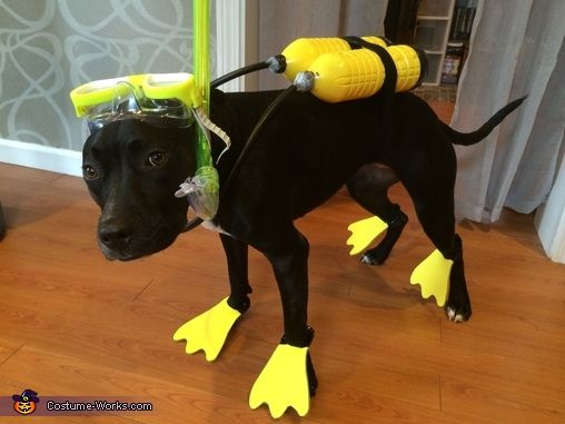 The 46 best funny dog costumes images on pinterest animal costumes scuba dog halloween costume contest at costume works clever costumesdiy solutioingenieria Image collections