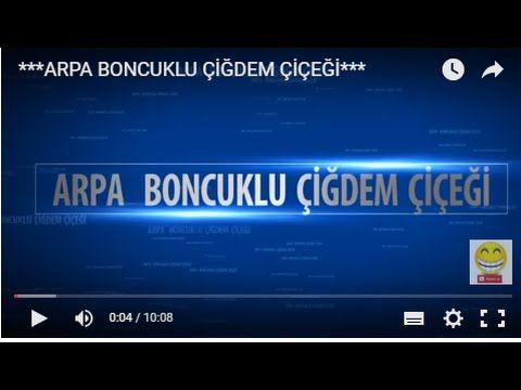 ***ARPA BONCUKLU ÇİĞDEM ÇİÇEĞİ*** - YouTube