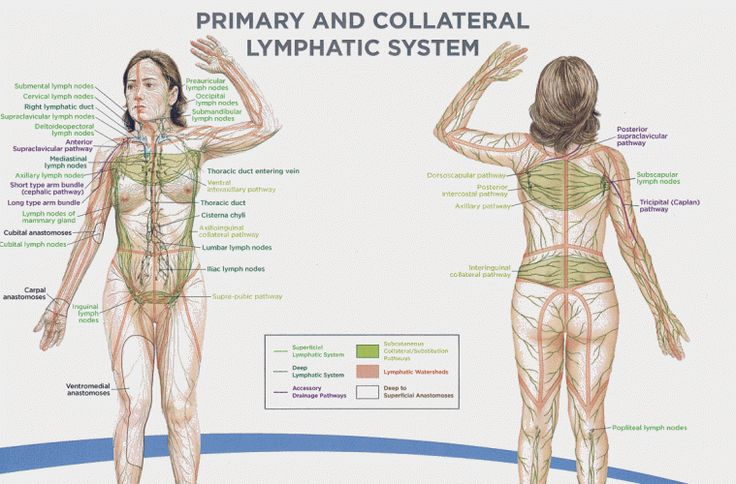 Simple Exercise to Naturally Drain Your Lymph System, Boost Immune Function and Remove Toxins - Collective Evolution