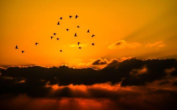 Procuro o voo meu. Hora dessas, um pássaro livre me pousa no ombro. http://lounge.obviousmag.org/palavras_peregrinas/2015/10/antes-duas-maos-vazias-e-todos-os-passaros-voando.html