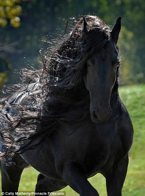 Todos O Consideram O Cavalo Mais Lindo Do Mundo: A Sua Elegância é Indescritível