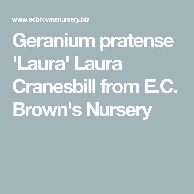 Geranium pratense 'Laura' Laura Cranesbill from E.C. Brown's Nursery