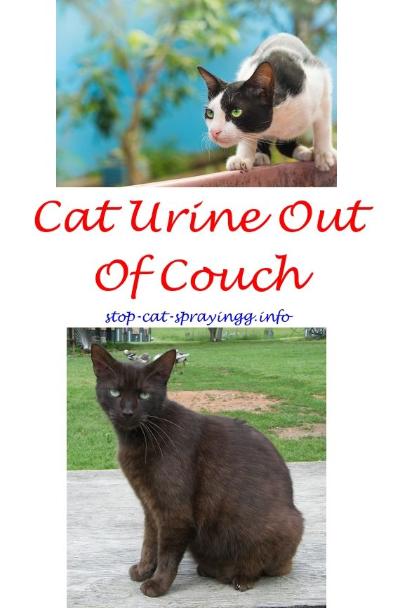Admirable Cat Relaxing Spray Cat Scratch Sofa Spray Cat Spray Odor Beutiful Home Inspiration Truamahrainfo