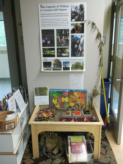 nature table. Teacher's added documentation about the project. This si a way of making children's learning visible to families and other colleagues.