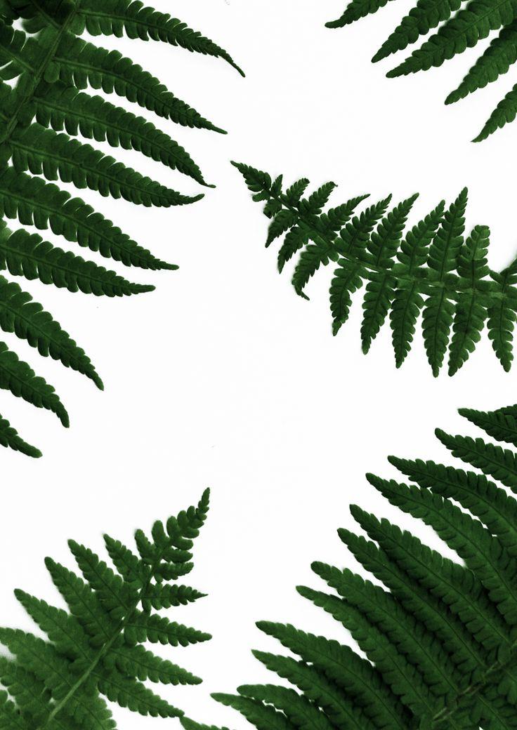Farn Blätter   Fern leaves   Kostenloser Print zum Download   Free Printable   Ich zeige euch auf meinem Blog schereleimpapier, wie ihr als Geschenk zum Muttertag für ein Poster einen tollen magnetischen Bilderrahmen aus Metall in gold basteln könnt, den passenden Print mit floralem Farn Pflanzen Motiv gibt es als gratis Printable als Freebie zum Download dazu. Eine tolle grüne botanische Deko für jedes Zuhause und super als Geschenkidee für die Mutter! Dein Muttertagsgeschenk mit...