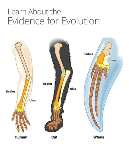 The evidence and claims for evolution and creation