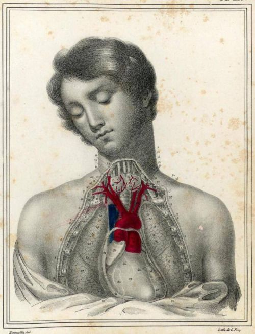 Dissection du thorax.  'Manuel d'anatomie descriptive du corps humain' (https://pinterest.com/pin/287386019950178976). Jules Cloquet (https://pinterest.com/pin/287386019948845673), 1825. From: The Irregular Anatomist via brains-and-bodies. See/Voir https://pinterest.com/pin/287386019948331063