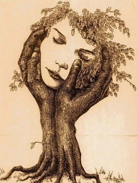 « Il y a deux sortes d'arbres : les hêtres et les non-hêtres.  » Raymond Queneau