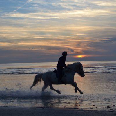 Dagtocht te paard Egmond