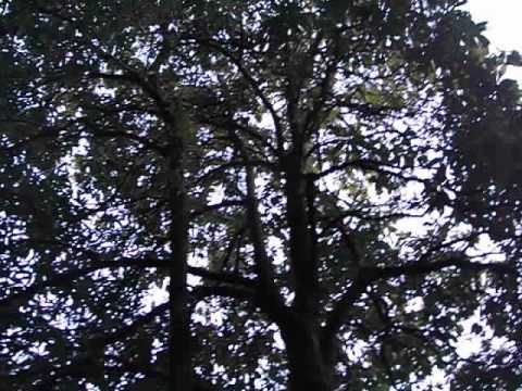 Ptaki w dzungli kolo Pothany