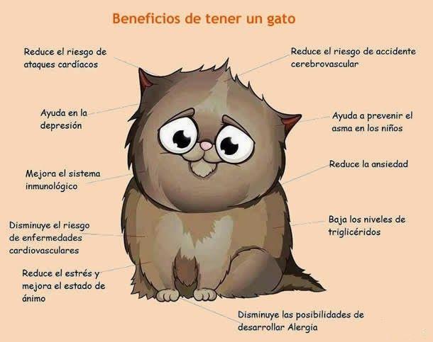 Venta de Gatos Persas en Uruguay: Beneficios de tener un Gato Persa en casa