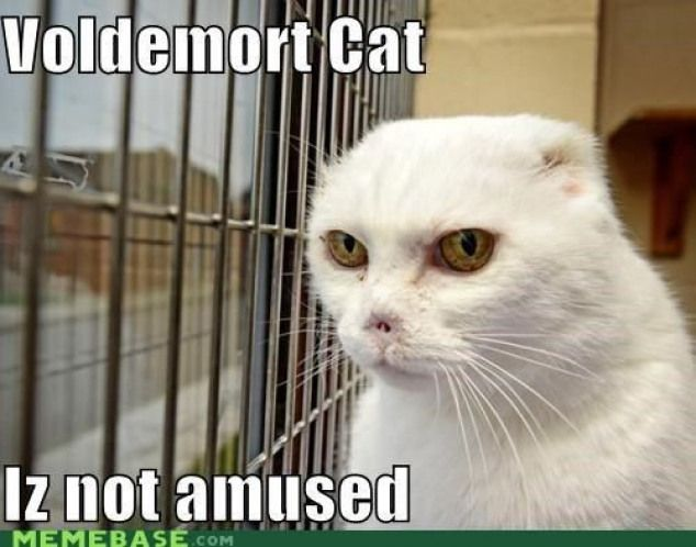 Harry Potter Funny Meme 9gagfunny 9gag Funny Harry Potter Funny Cat Memes Voldemort Cat Kittens Funny