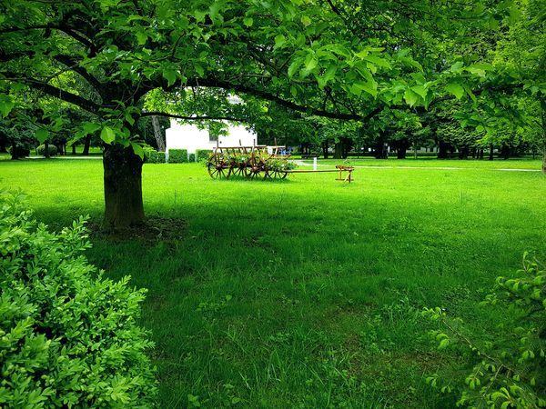 Green Color Grass Growth Nature Tree Day Outdoors No People Beauty In Nature Rainy Days RomaniaIsAmazing Trees And Nature Trees Collection Green Green Green!  EyeEmNewHere Beauty Of Nature Perfect View Nature Green Color Growth Grassland Charriot Old Perfection Perfect Day For Photography