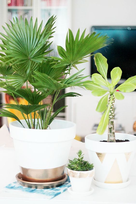 Decorare creativamente un vaso in terracotta! Bellissimi… 20 idee + Tutorial!